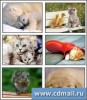 Adorable Animals Screensaver